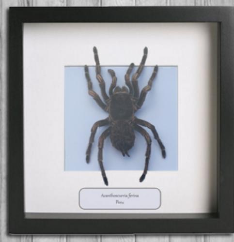 Insecten Design (webshop) Gent