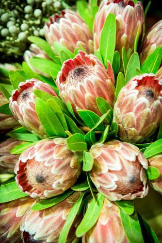Fleur de Lies Bloemenatelier Oostende