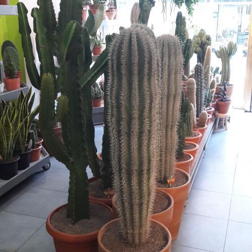Antwerp Cactus Antwerpen